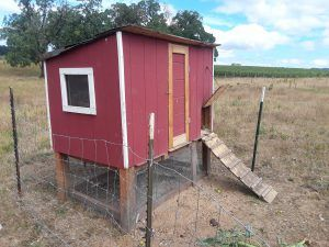 Medium Sized Chicken Coop