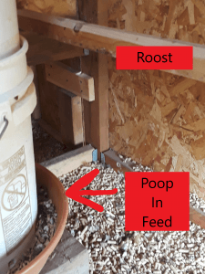 Poop In Chicken Feed