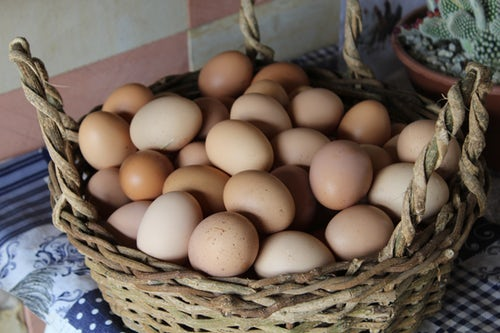 Raising Egg Laying Hens