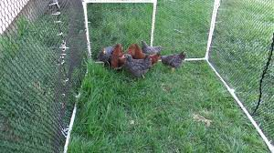 Run For Chickens No Top
