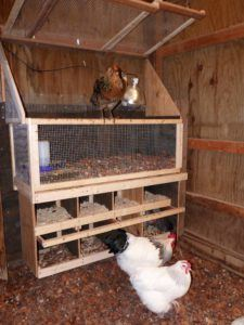 Nest Boxes For Laying Hens