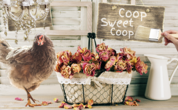 chicken coop decor ideas