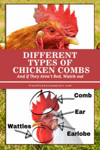 Different Types Of Chicken Combs