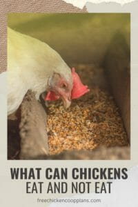 Foods chickens can eat
