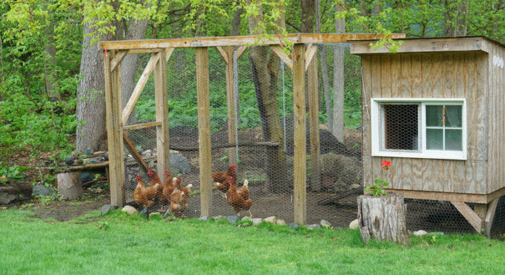 Chicken Coop Placement