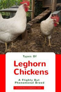 different types of leghorns
