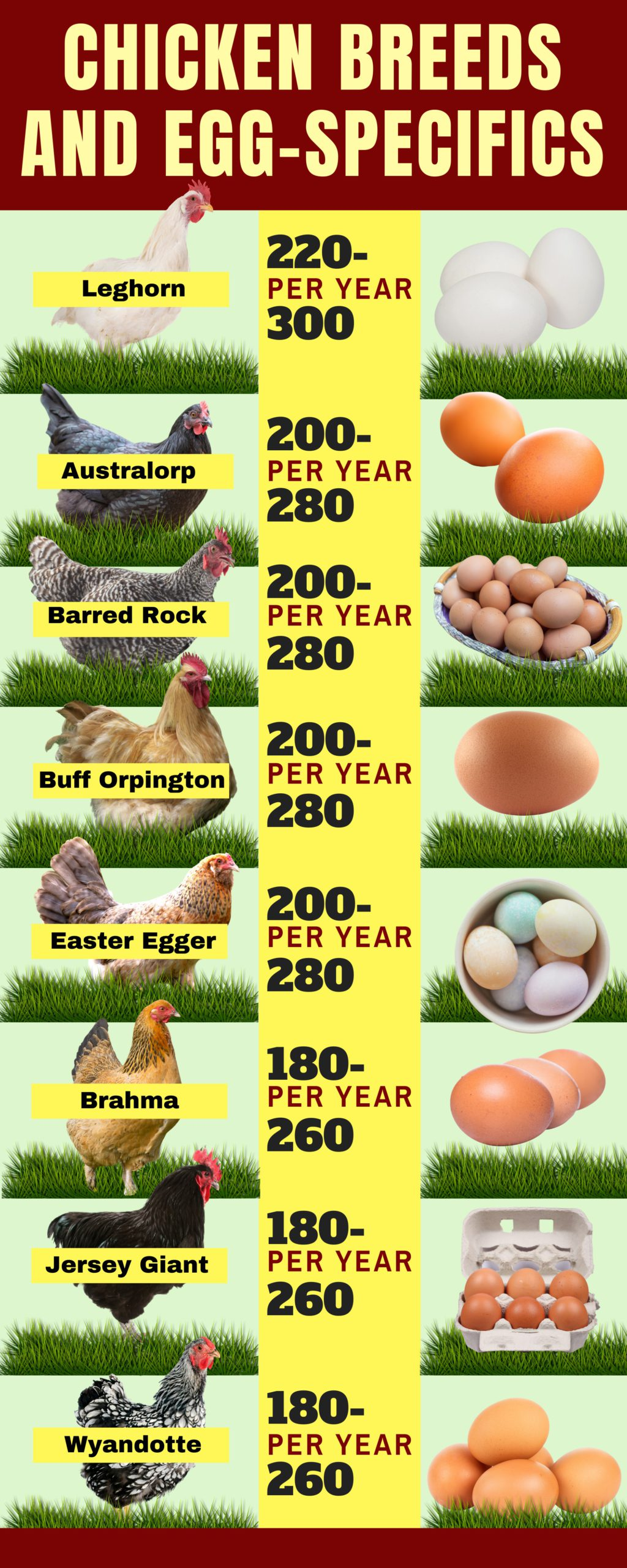 how to sell chicken eggs profit