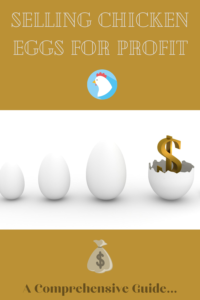 How to profit selling eggs
