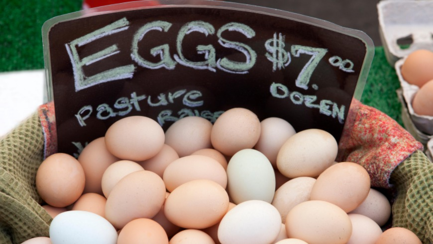 Sell eggs from home
