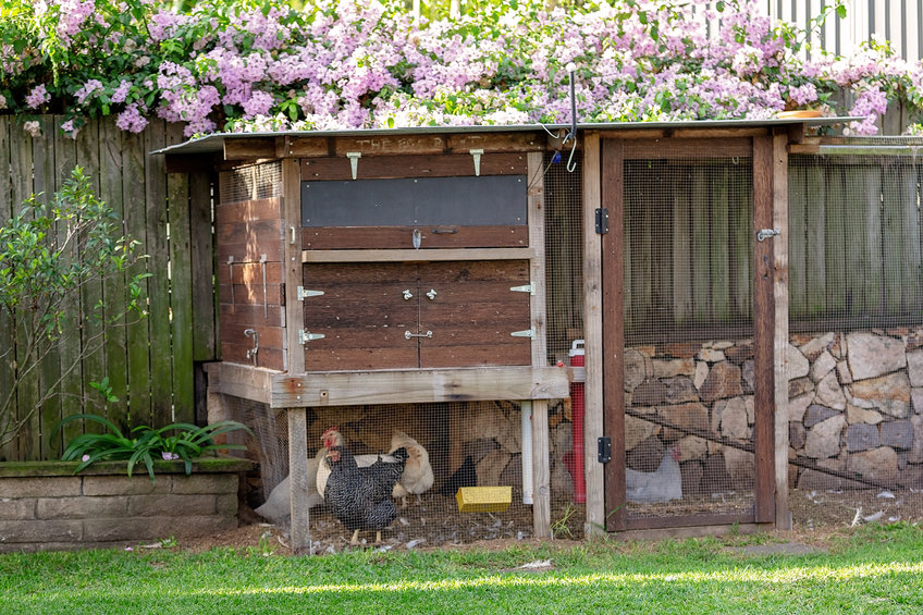 Does a chicken coop need to be off the ground?